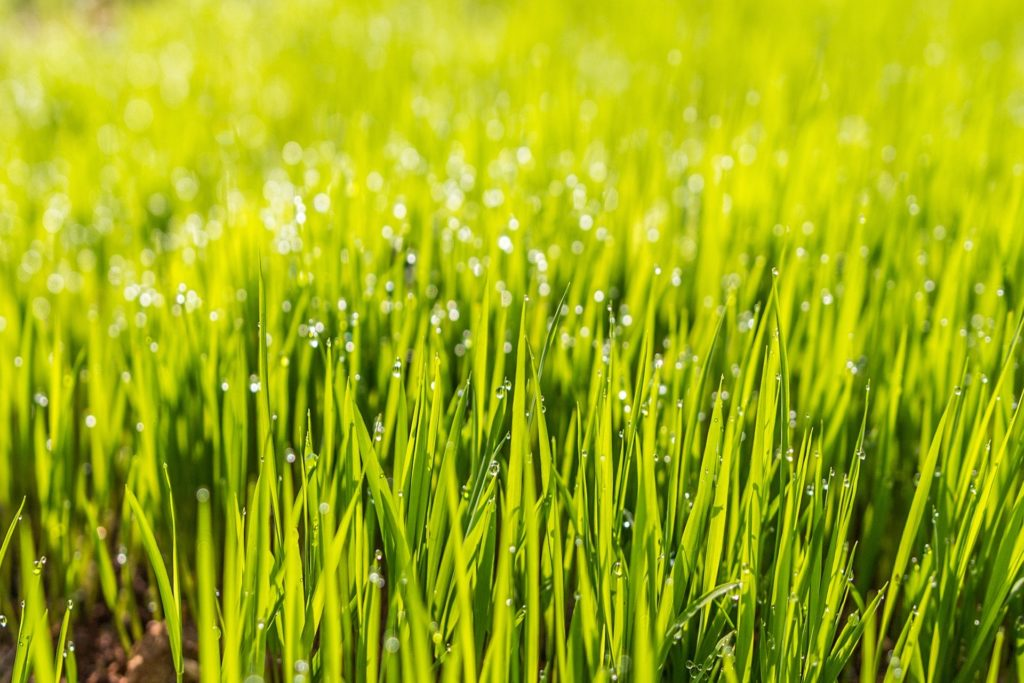 vi på romelanda grönytor hjälper dig med gödsling och sådd