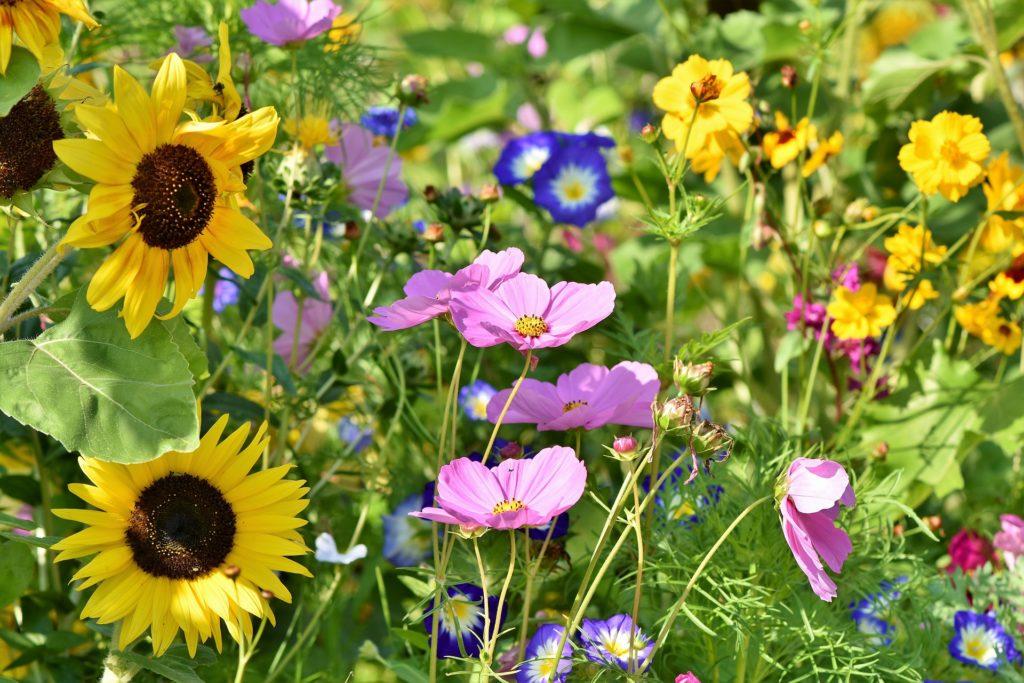 fin sommar blomsteräng