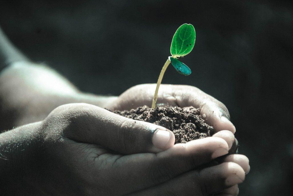 biokol markens bästa vän för en hållbar trädgård